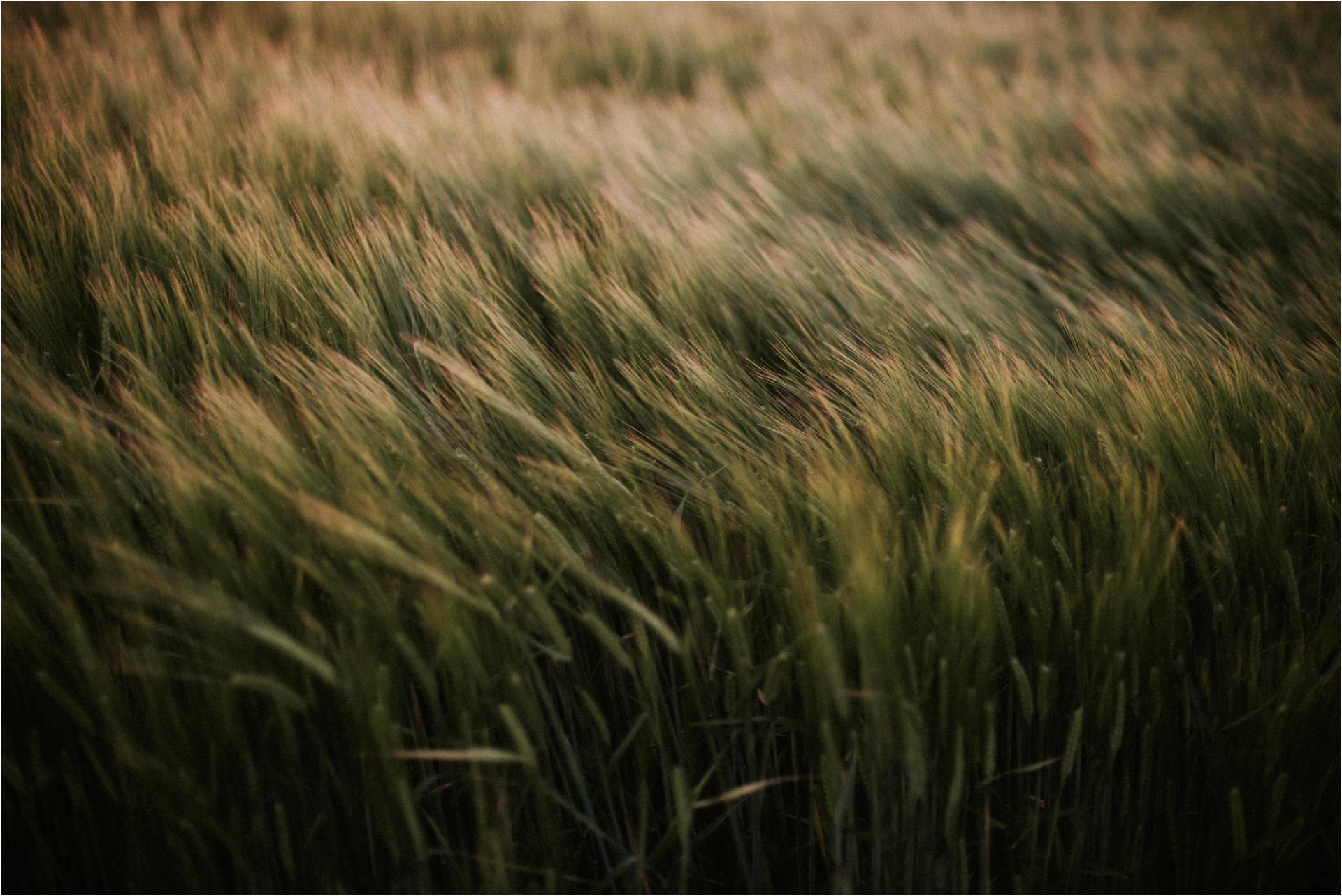 barleyearsandfoxcubs18