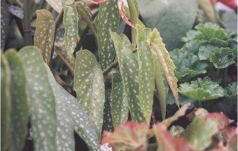 Botanics ~ on film
