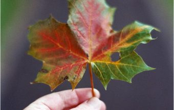Dancing rainbows of colours ~ autumn on film